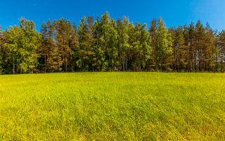 Кадастровая стоимость земельного участка по кадастровому номеру — порядок определения