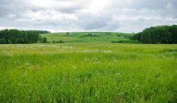 Очередь на земельный участок для многодетных семей — практические советы