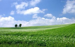 Общая долевая собственность на земельный участок