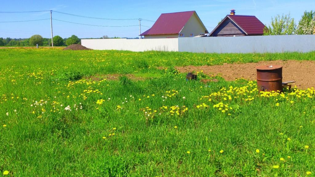 трава в деревне